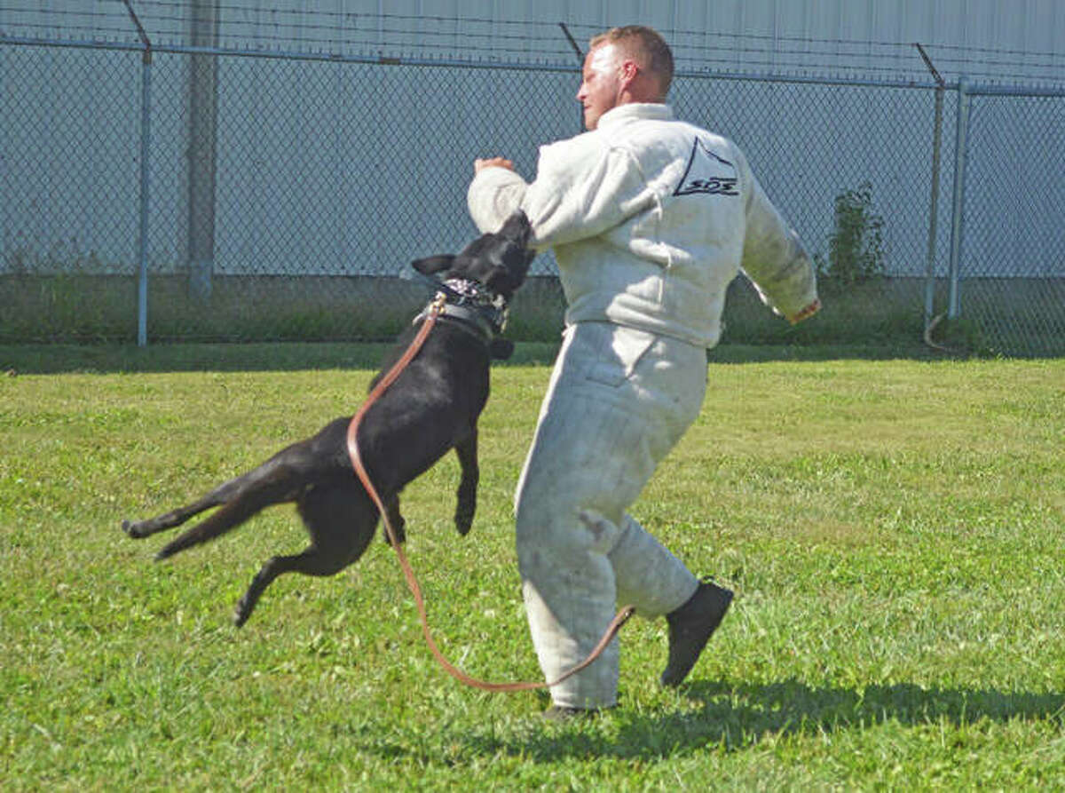The Glen Carbon, Litchfield, Collinsville and Pontoon Beach police departments and the Madison County and Macoupin County sheriff's departments held a K9 demonstration Sunday afternoon as part of the 65th anniversary open house at Hawthorne Animal Hospital.