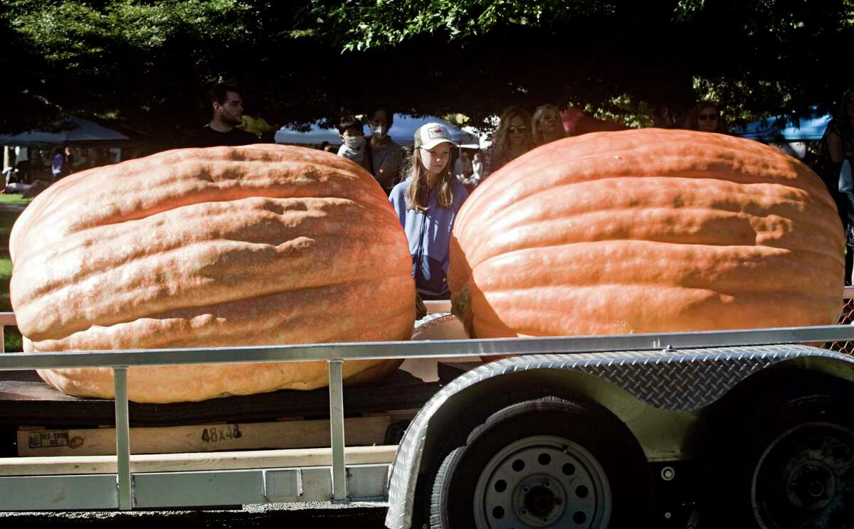 Giant pumpkins roll in on trailers at Ridgefield's Giant Pumpkin Weigh Off and Festival at Ballard Park. Sunday, Sept. 26, 2021.