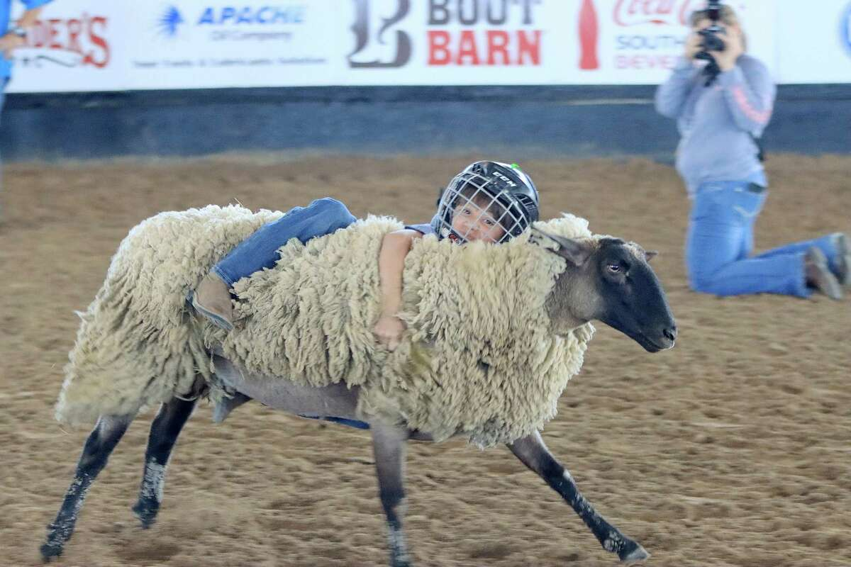 Nicolas Reyes seeks to stay mounted on a sheep on Sunday at the Pasadena Livestock Show and Rodeo, which is marking its 71st year and continues through Oct. 2.