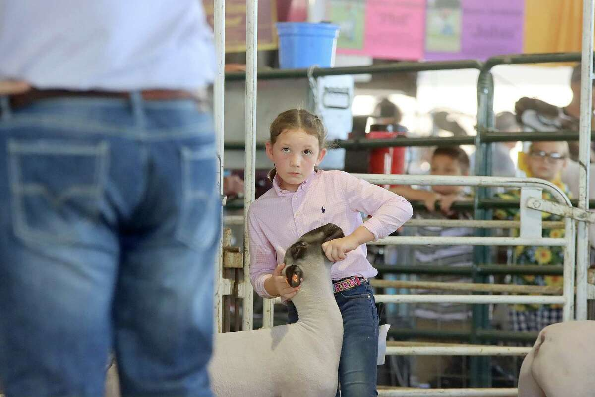 A contestent awaits the judge's instructions at the lamb show.
