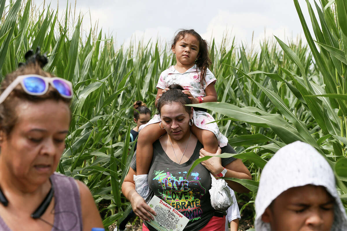 Tasha Leeper carries her daughter, Aliyah Leeper, 3, as they navigate the trails in the Traders Village Corny Maze, the only one of its kind within the San Antonio City limits, on Sunday, Oct. 14, 2018.