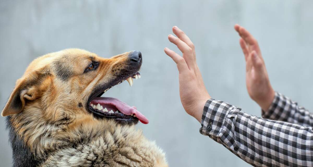 State Farm paid almost $157 million last year in connection to nearly 3,200 dog bite or injury claims - about a 115% increase from the previous year, according to the insurance company. Illinois was second in the nation, behind only California, with State Farm paying $12.6 million for 258 claims statewide.