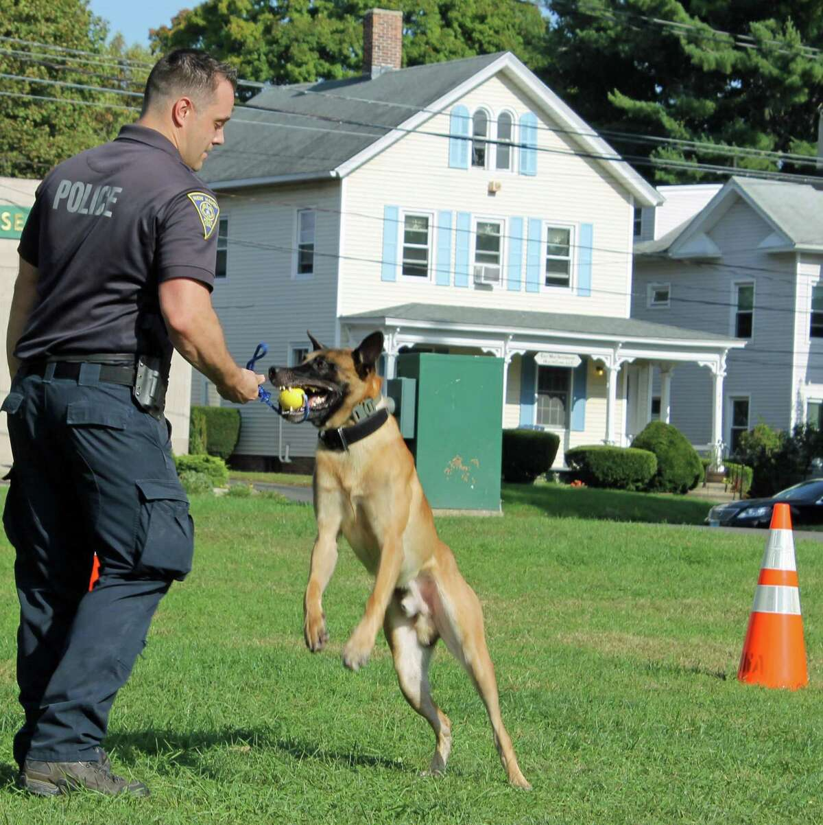 At left, There will be jaw-dropping search-and-rescue dog demos at Animal Awareness Day on the Branford Green Oct. 3.