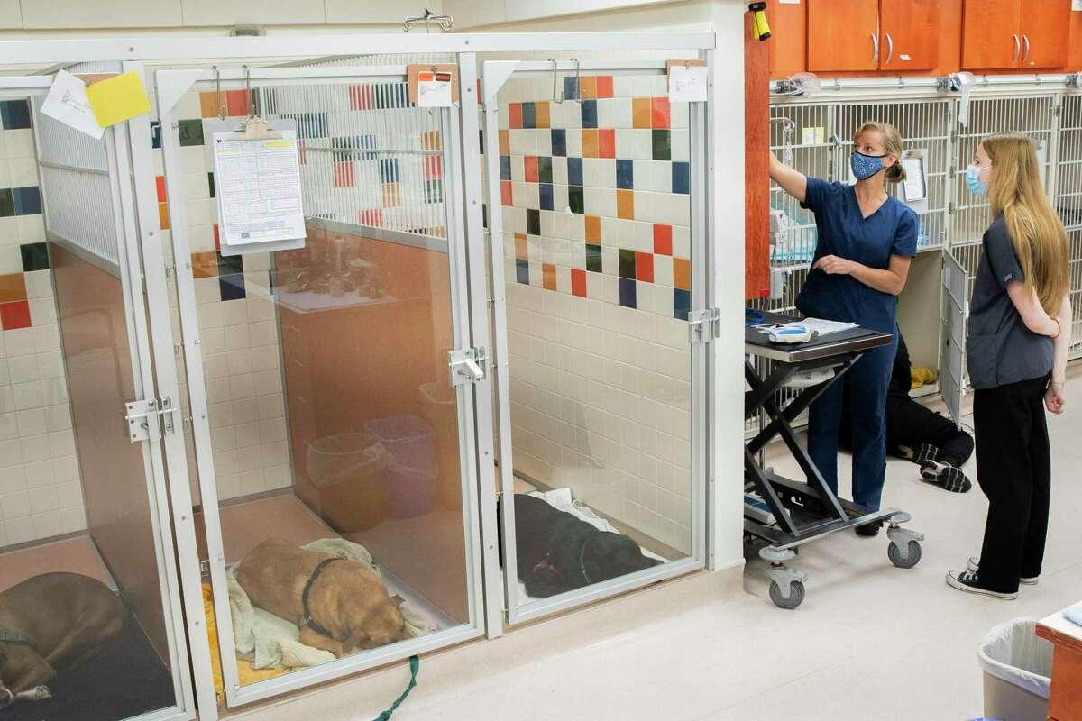 Sara Taylor and Sam Holster at the SPCA Veterinary Hospital, Wednesday, Sept. 22, 2021, in San Francisco, Calif.