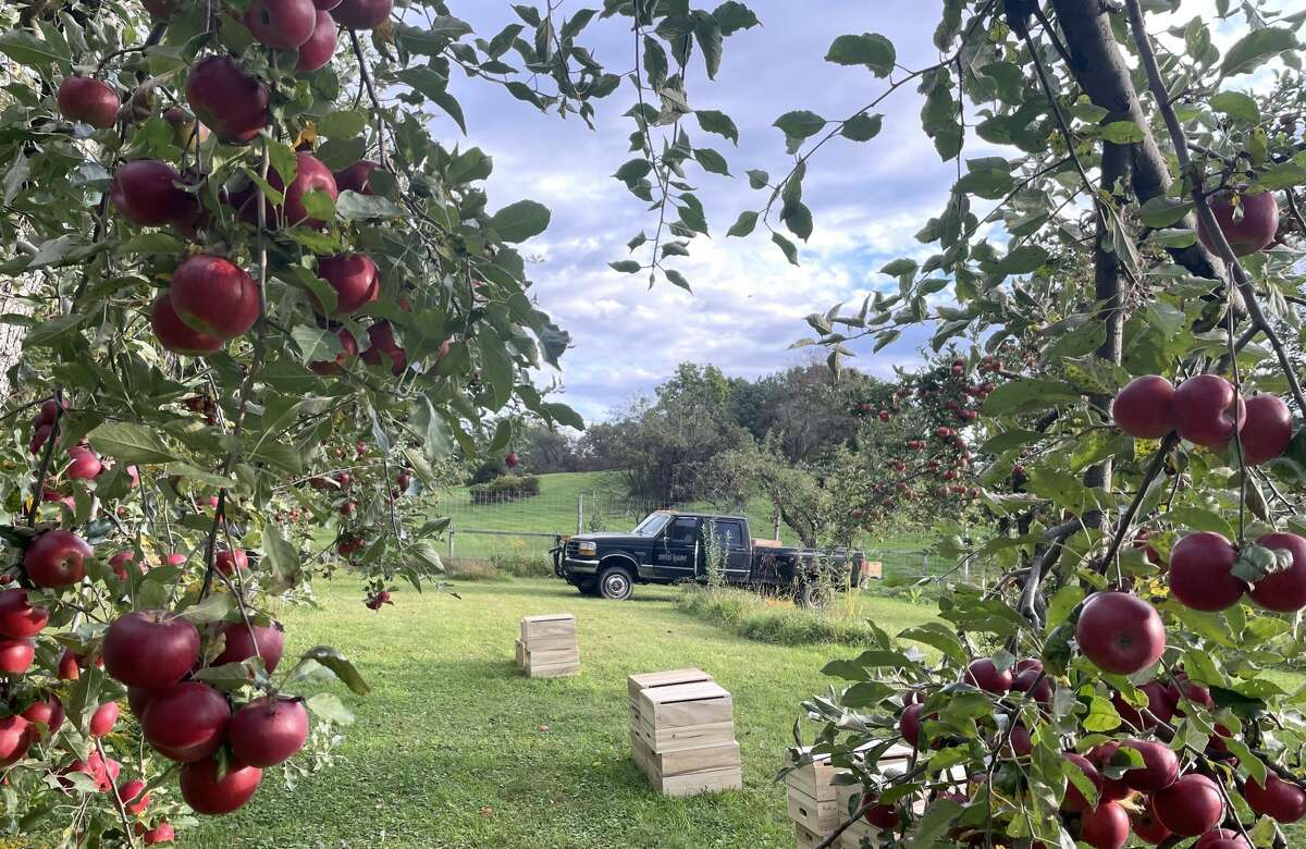 """Kimberly Kae's cidery, Metal House Cider, is based in Esopus, home of the Hudson Valley's first commercial apple orchard in 1838. """"Apples are our grapes,"""" says Kae. """"Cider is our 'wine.' We're trying to make something that really is terroir driven."""""""