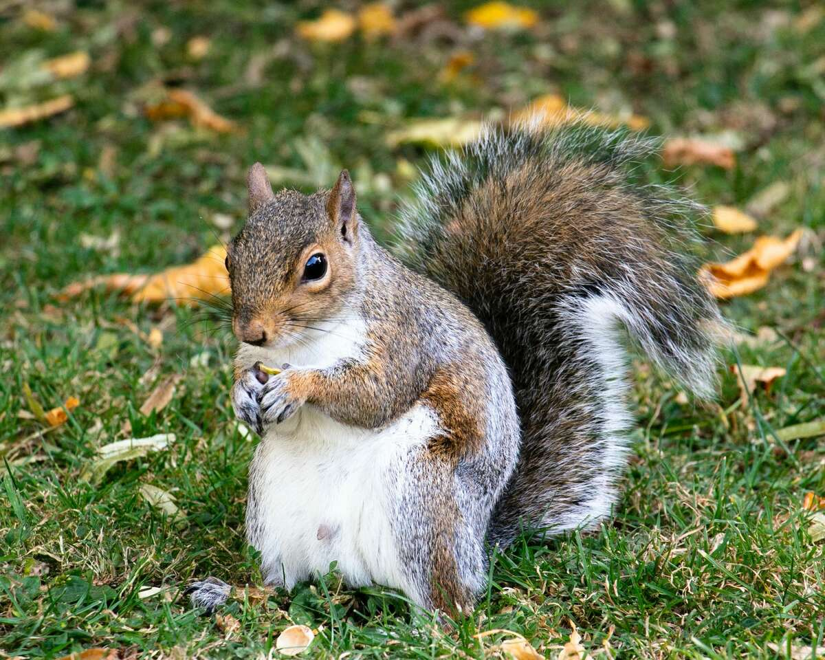 A study says squirrels have similar personalities to humans.