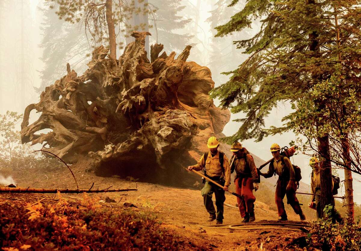 Firefighters battle the Windy Fire as it burns in the Trail of 100 Giants grove in Giant Sequoia National Monument on Sunday.