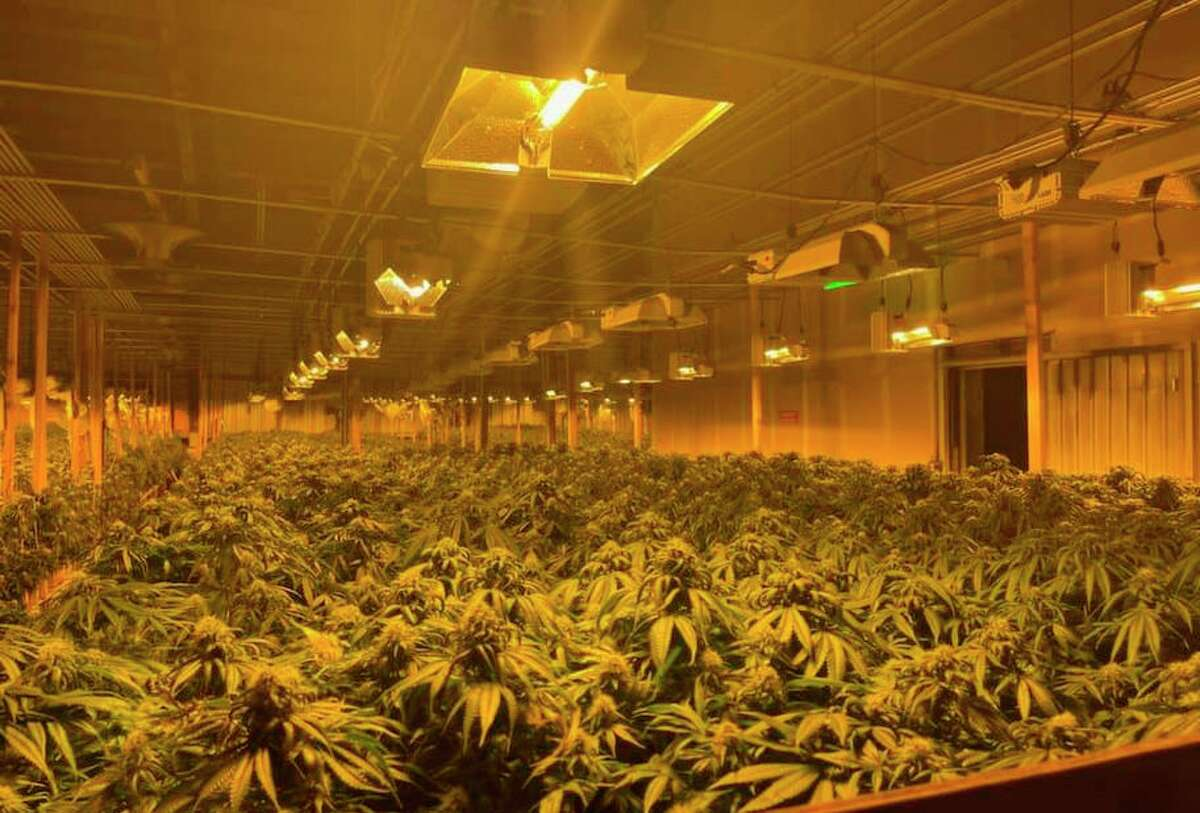 Alameda County deputies found more than 100,000 marijuana plants and more than $10 million in cash, officials say.