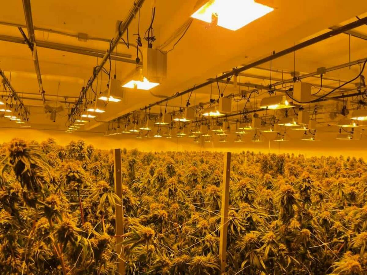 """Alameda County sheriff's detectives seized more than 100,000 marijuana plants and more than $10 million in cash as part of what authorities describe as """"taking down"""" one of the largest illegal cannabis grow operations in California, authorities said."""