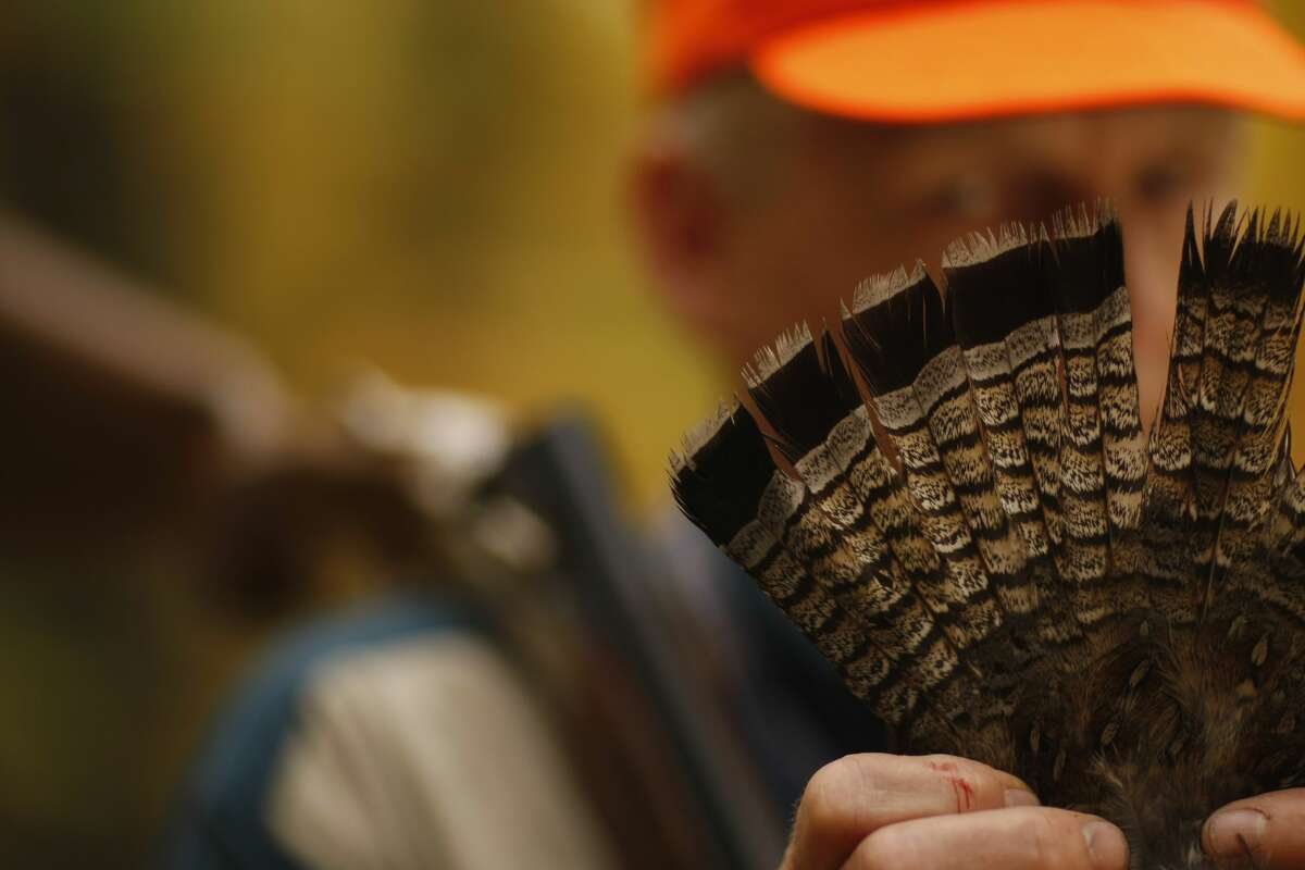 Pictured is a man showing ruffed grouse feathers in Michigan.