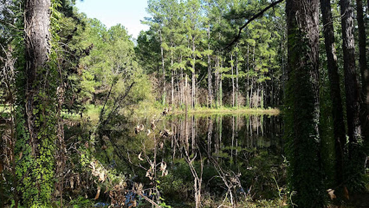 Sam Houston National Forest in Montgomery County, Texas.