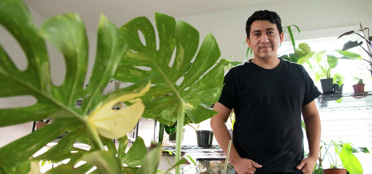 Rare and in-demand houseplants are part of Juan Zavala's collection . Some of his plants can have a value of nearly $4,000.