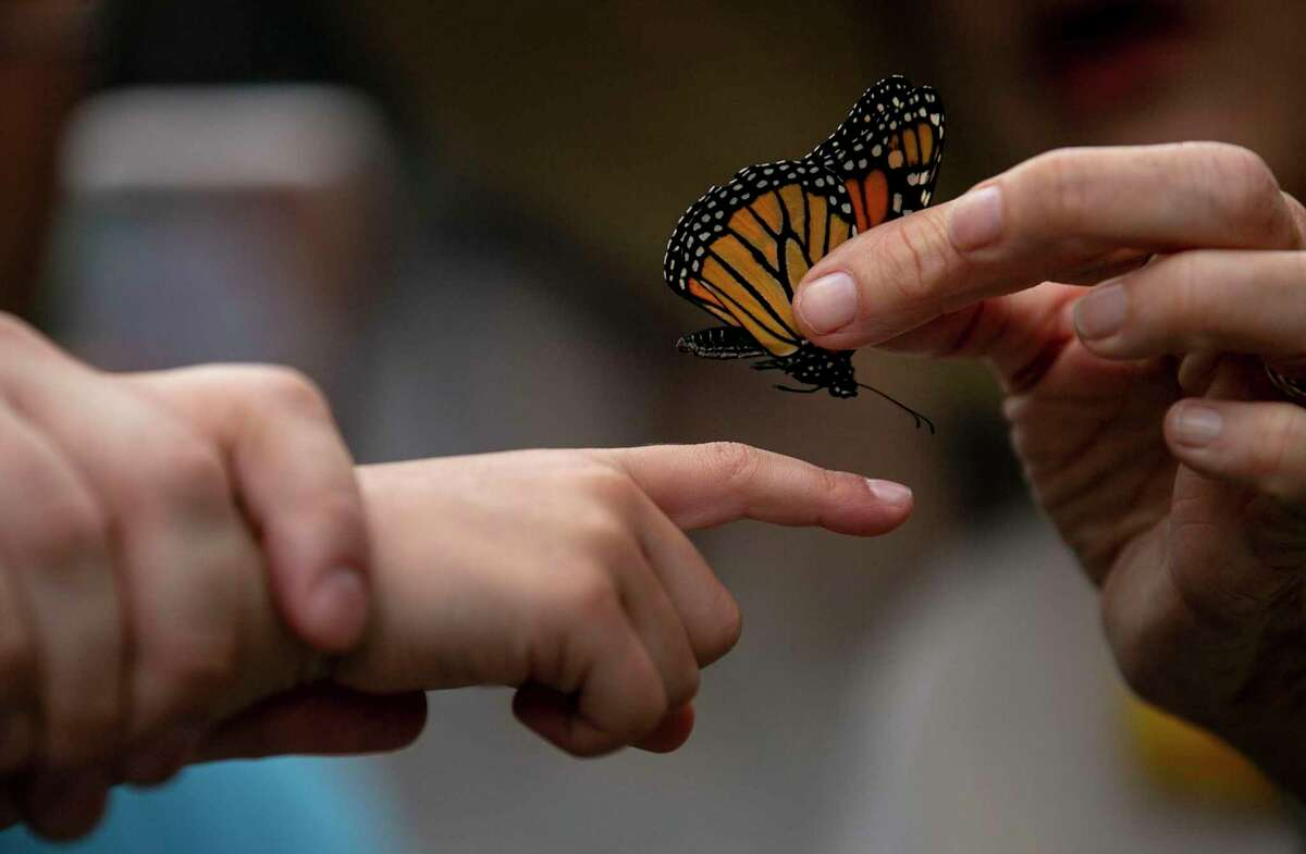 The sixth annual Monarch Butterfly and Pollinator Festival will feature events throughout October, starting Saturday, with the signature event on Oct. 16 and Confluence Park.