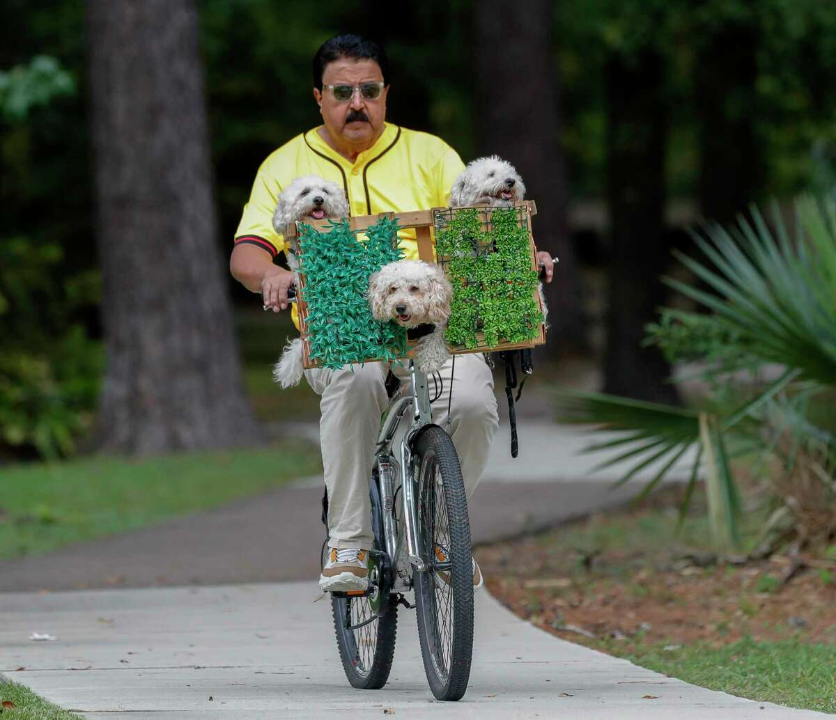 Jose 'Joe' Ruiz and his three poodles ride along Kingwood Drive, Monday, Sept. 27, 2021, in Kingwood. Last October, the retired railroad worker began riding with his dogs and their custom-made carrier around Kingwood and can be spotted most evenings. 'Last year with the pandemic and the election there wasn't a lot of happiness or joy.' Ruiz said. 'All I want to do is make people happy - to laugh. If I've done that, even if I don't see their faces as they drive past, I feel like I've done my job.'