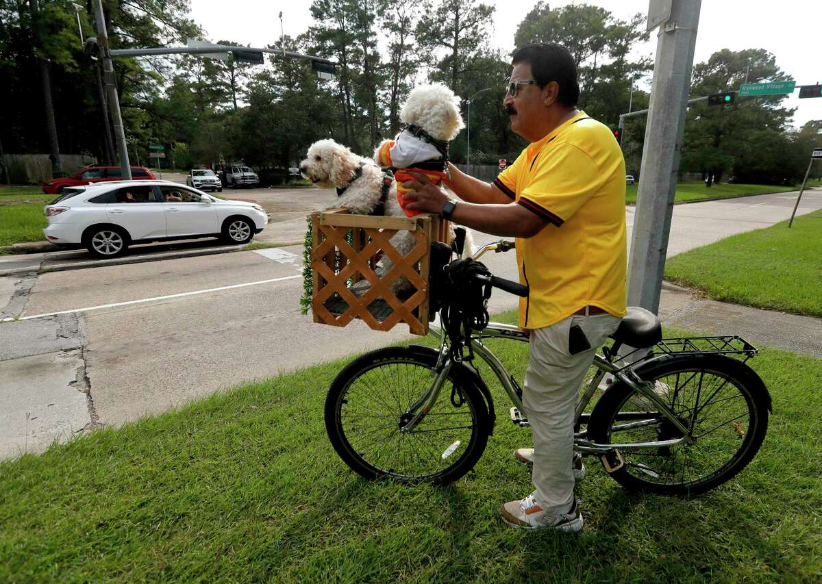 Jose 'Joe' Ruiz and his three poodles wave to vehicles as they drive along Kingwood Drive, Monday, Sept. 27, 2021, in Kingwood.Last October, the retired railroad worker began riding with his dogs and their custom-made carrier around Kingwood and can be spotted most evenings. 'Last year with the pandemic and the election there wasn't a lot of happiness or joy.' Ruiz said. 'All I want to do is make people happy - to laugh. If I've done that, even if I don't see their faces as they drive past, I feel like I've done my job.'