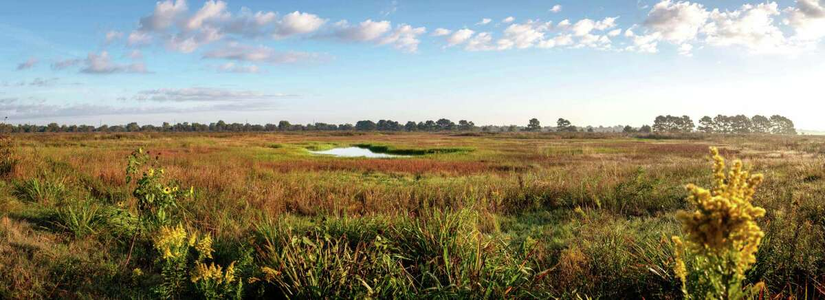 Restored wetlands on the Katy Prairie Conservancy's Indiangrass Preserve.