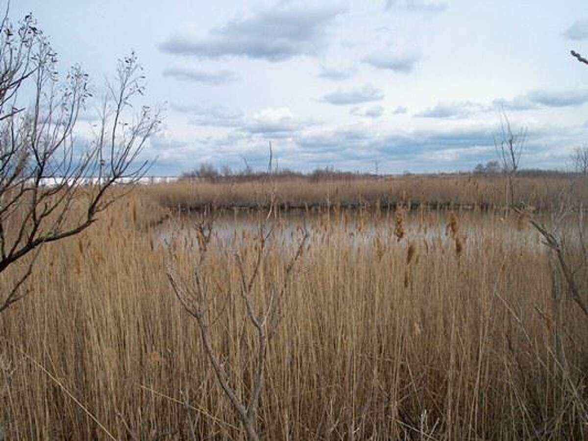 The Great Meadows is a salt marsh connected to the back side of Long Beach, according to the town of Stratford.