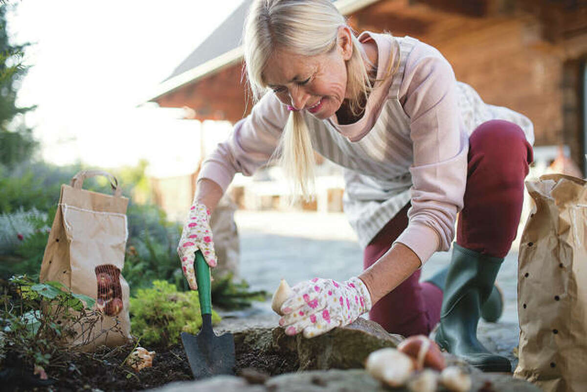 Selecting a site that provides some shade during the middle of the day can often help prolong the life of your bulb's blooms.