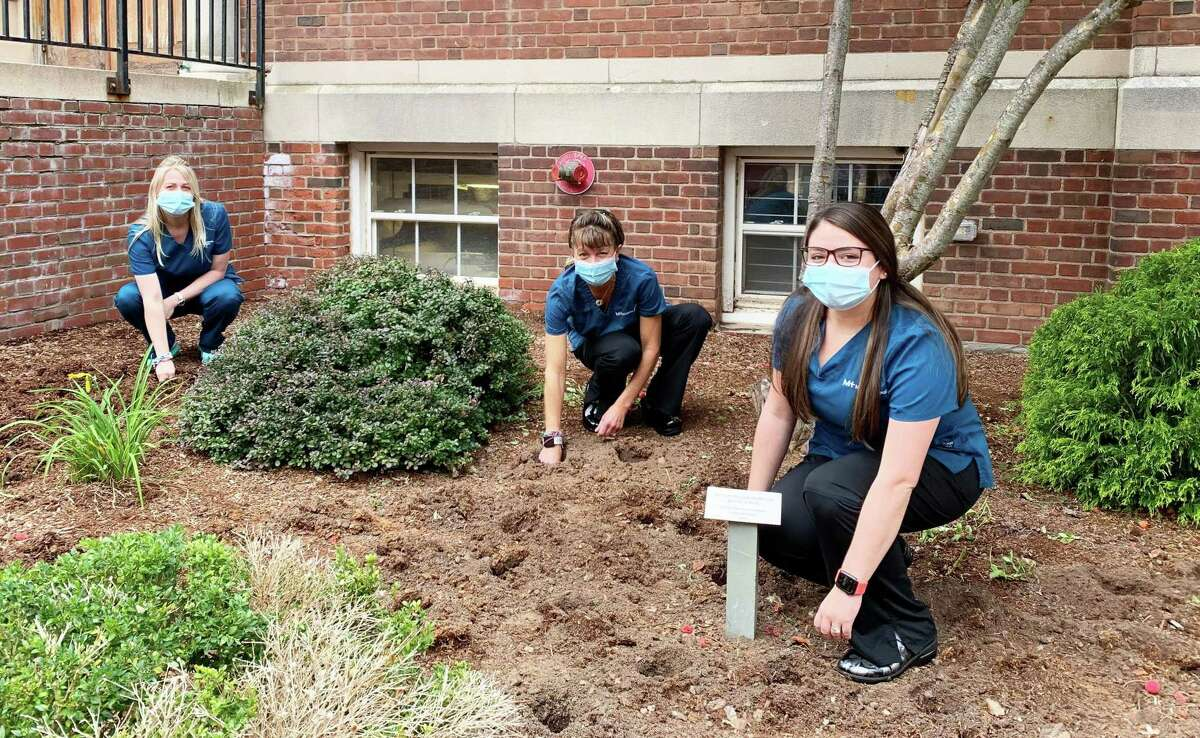 Middlesex Health employees planted about 300 daffodil bulbs in front of the health system's Bengtson-Wood Building in Middletown Sept. 30.