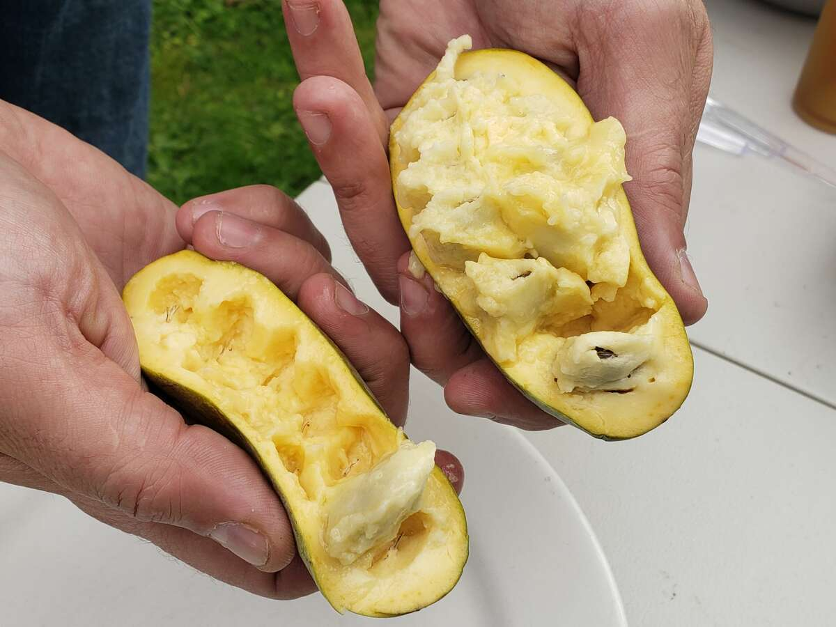 Eric Stroud opens a pawpaw to reveal the soft flesh and large bean-like seeds inside. Stroud and his wife are growing pawpaw trees in multiple locations.