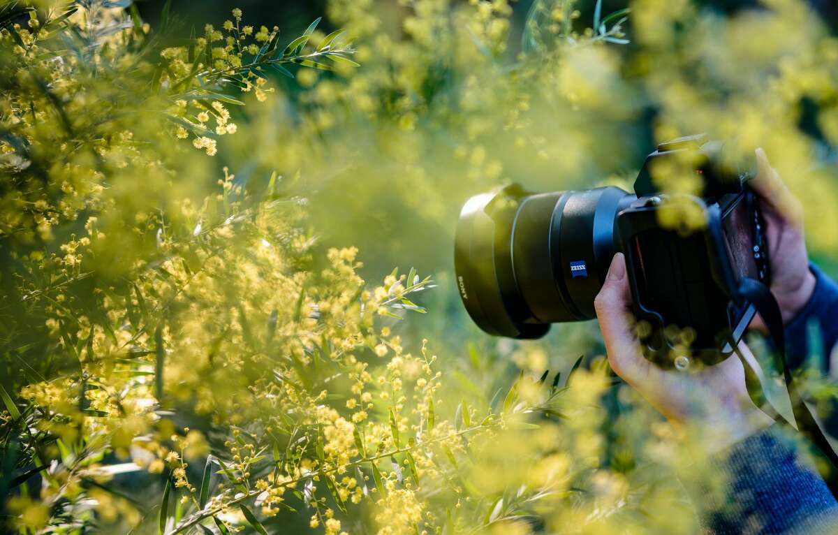 """Artworks' intermediate photography class will take photographers beyond the """"auto"""" setting."""