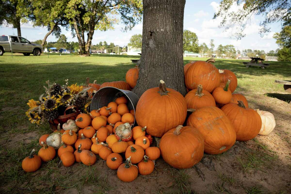 Random assortments of pumpkin are placed throughout a pumpkin patch at Magnolia First Baptist Church, Tuesday, Oct. 20, 2020, in Magnolia.