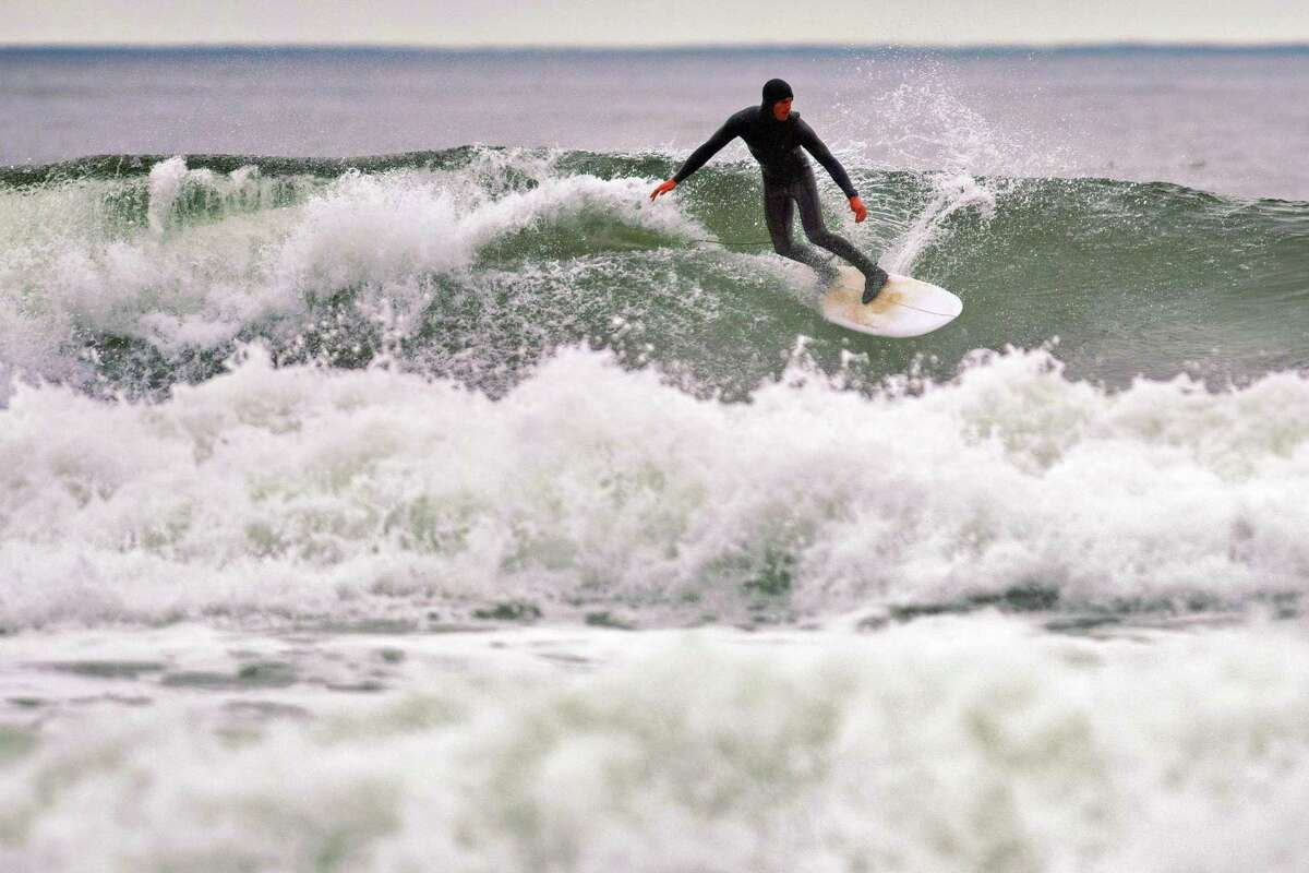 Michael Leddy surfs at North Salmon Creek Beach just north of Bodega Bay after it was reopened. A surfer was bitten two day earlier by a great white shark in the area, which prompted the closure of nearby beaches.