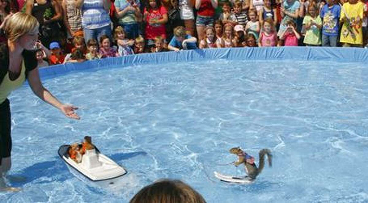 Twiggy the World-Famous Water-Skiing Squirrel performs during a previous Nature Fest in Bridgeland.