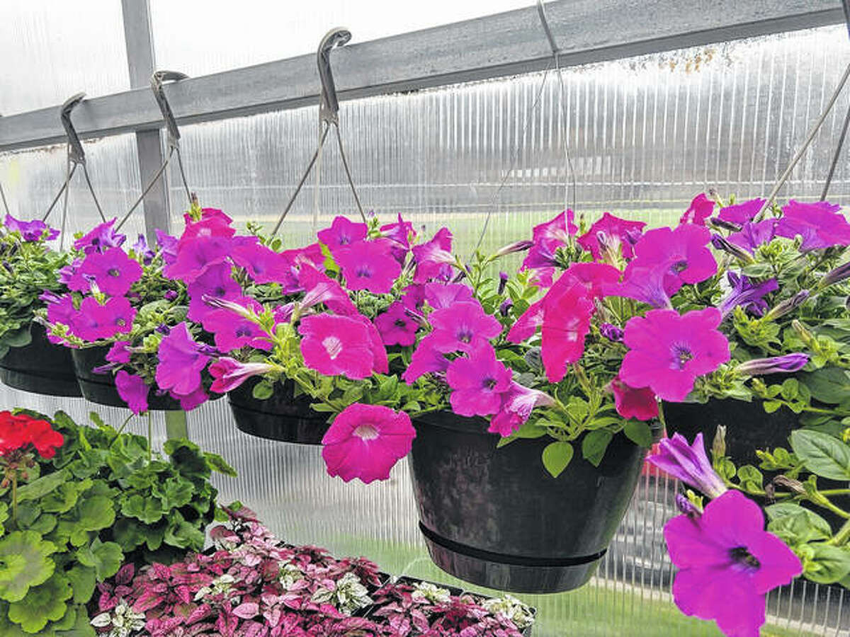 Plants in hanging baskets on city-owned land are excluded from the city's new native planting resolution passed Tuesday.