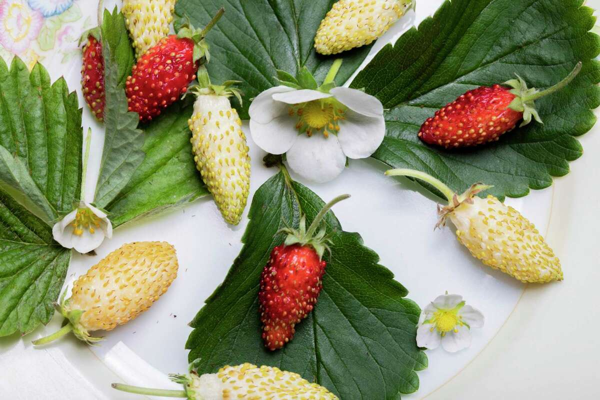 The strawberries at Chez Panisse in September 2021.