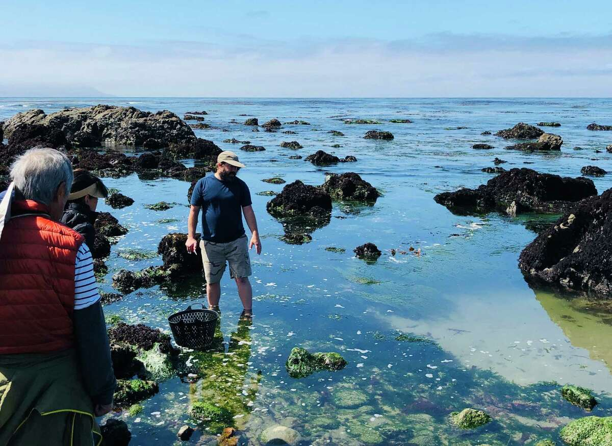 Spencer Marley of Marley Family Seaweeds explains how to gather edible seaweed on a remote beach near Cayucos, Calif. He later cooked ramen mixed with freshly plucked seaweed for the tour group.