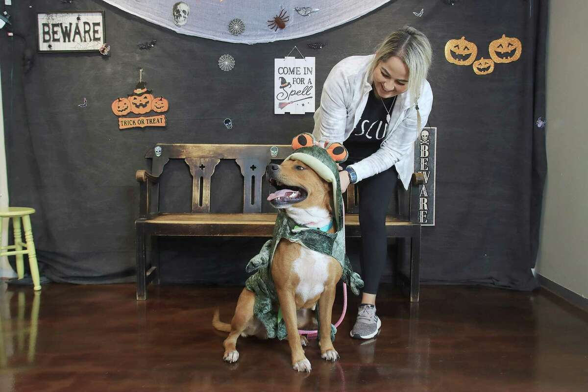 Ariela Bando with the Pasadena Animal Shelter helps Remi get in a costume she will wear at Pasadena Animal Shelter's Oct. 30 Pets and Pumpkins pet adoption event at the shelter, 5160 Burke Road, Pasadena.