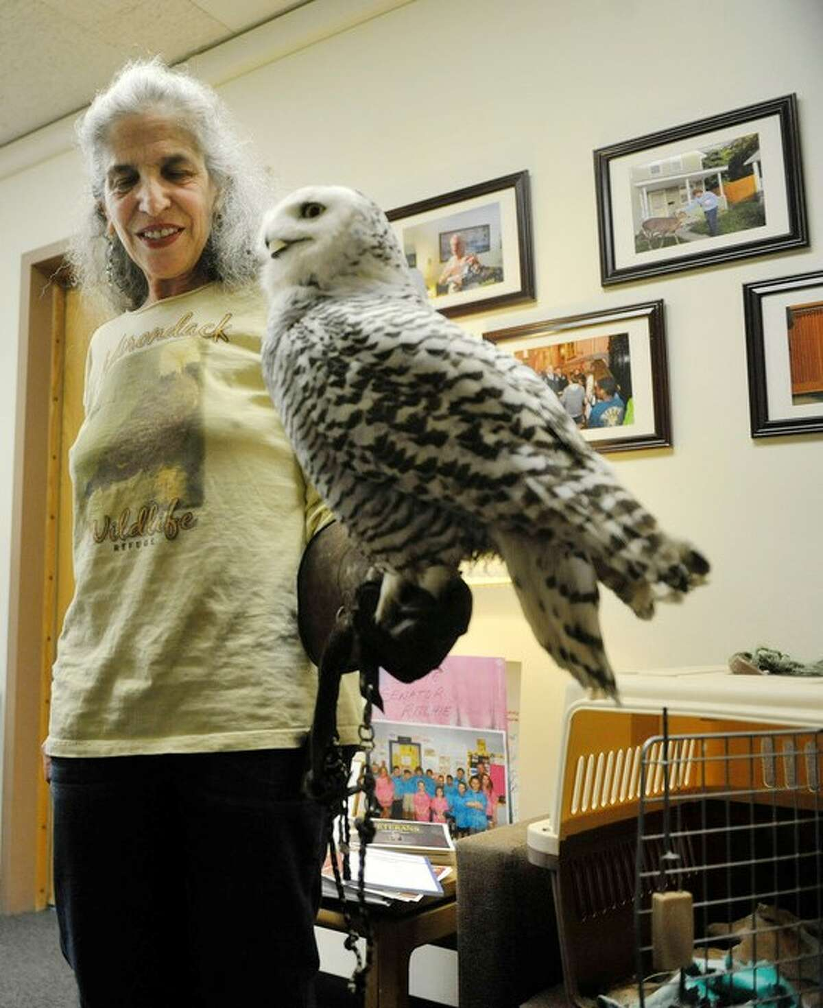 Wendy Hall of the Adirondack Wildlife Refuge and Rehab Center in Wilmington, holding snowy owl Cara, at the Legislative Office Building in Albany, N.Y. in 2015. Hall has surrendered two of her remaining wildlife licenses that the state planned to revoke after years of alleged deceptive and improper reporting about the Wilmington animal farm.