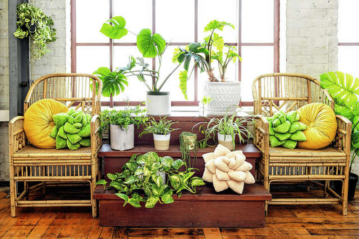 Green Philosophy Co.'s soft plush pillows are in the shape of a tropical leaf or succulent. It has partnered with Trees for the Future, so pillow and throw sales support planting initiatives worldwide.