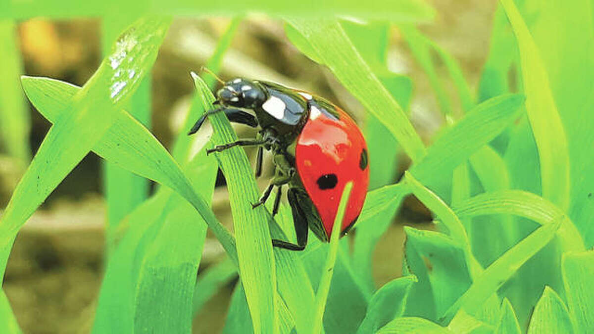 Many insects and other pests are making plans to move somewhere warm to survive the winter, and often that place is a house.