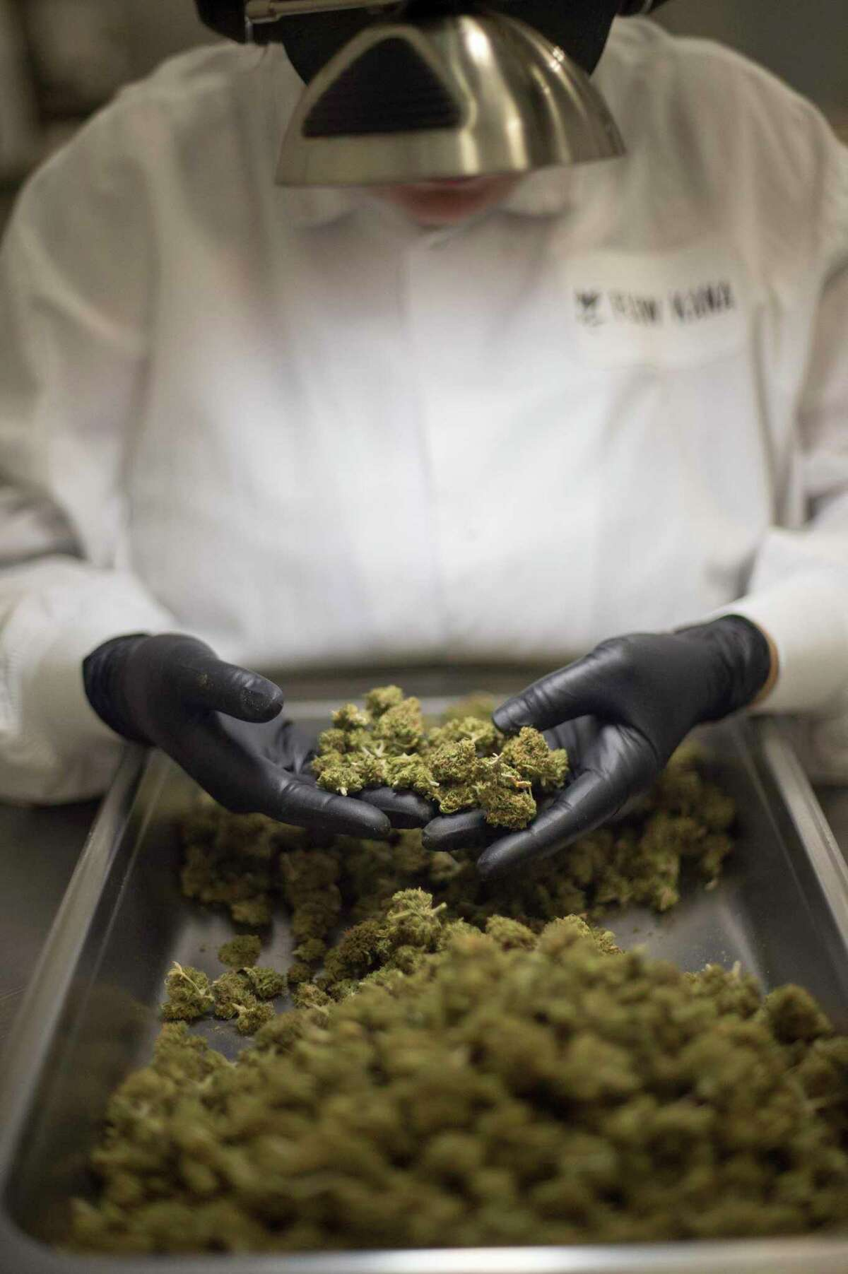 Cannabis is packaged and processed at Flow Kana, a CA-based cannabis brand that sources from small batch craft farmers, at their facility in Redwood Valley, CA on July 13, 2018. Summer Tres inspects cannabis for any molds or imperfections at Flow Kana.