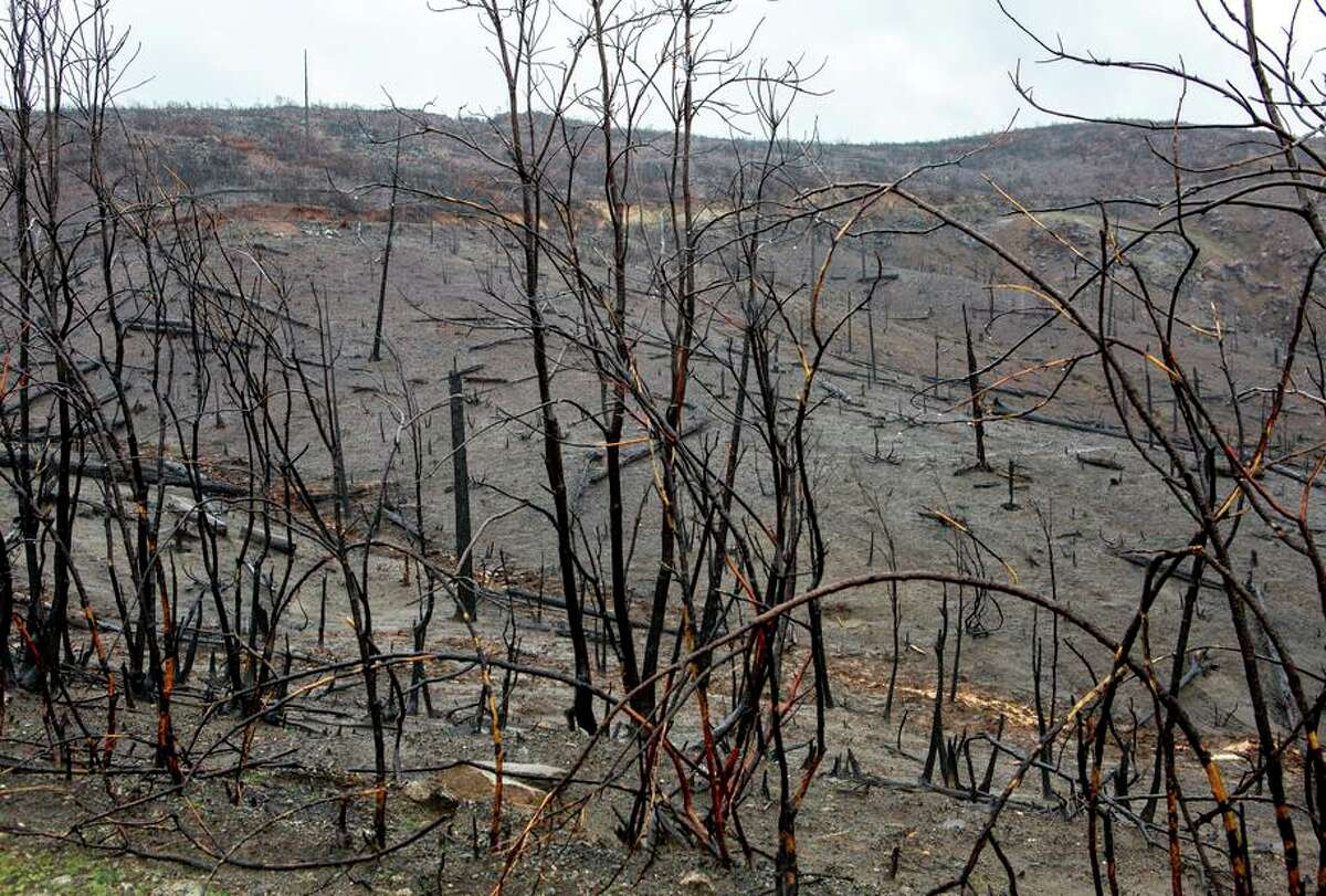 The Camp Fire left charred remains of trees in the area of the Camelot Equestrian Park on in Concow (Butte County).