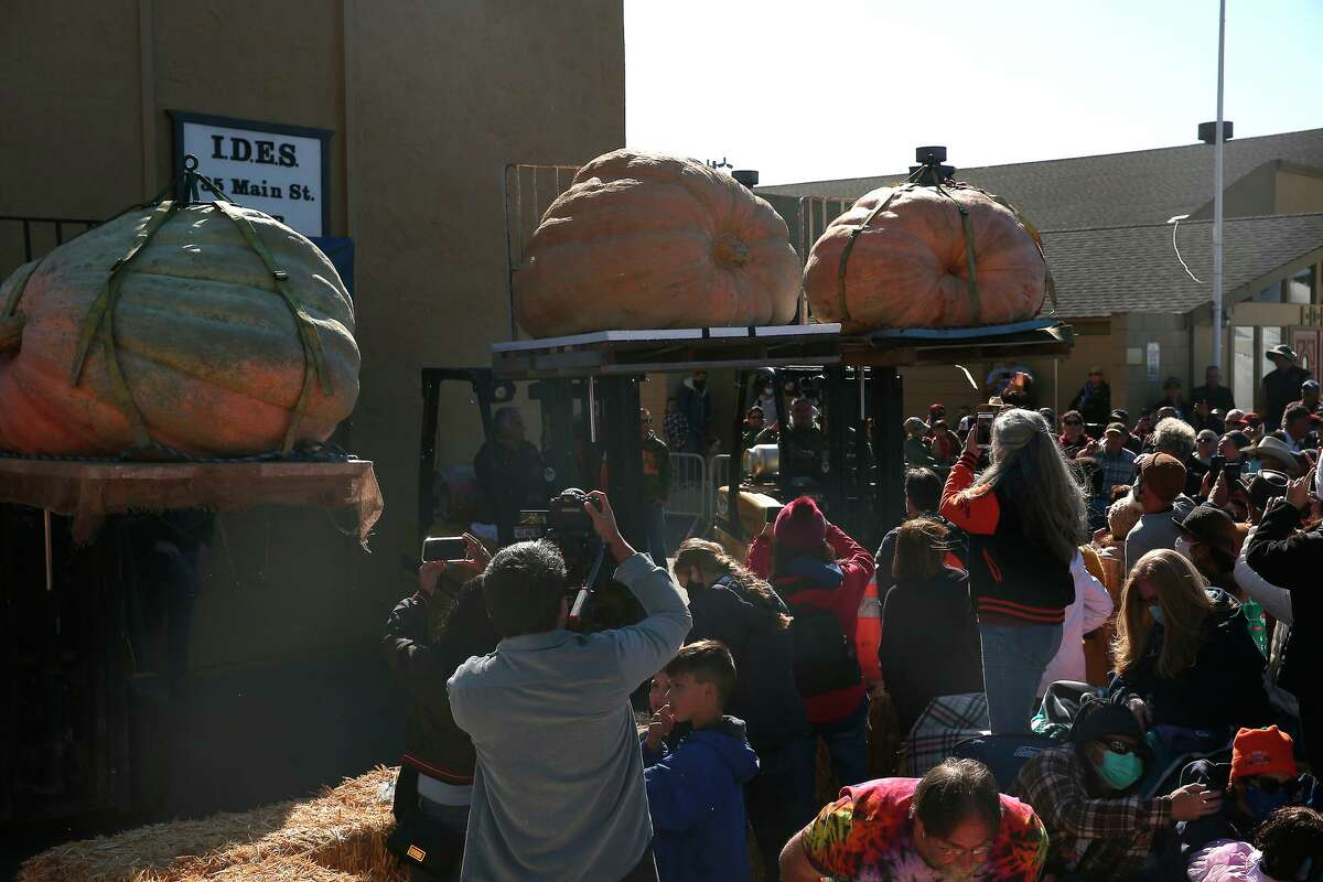 The final four pumpkins to be weighed are displayed for the crowd at the 48th Safeway World Championship Pumpkin Weigh-Off on Monday, October11,2021 in Half Moon Bay,, Calif.