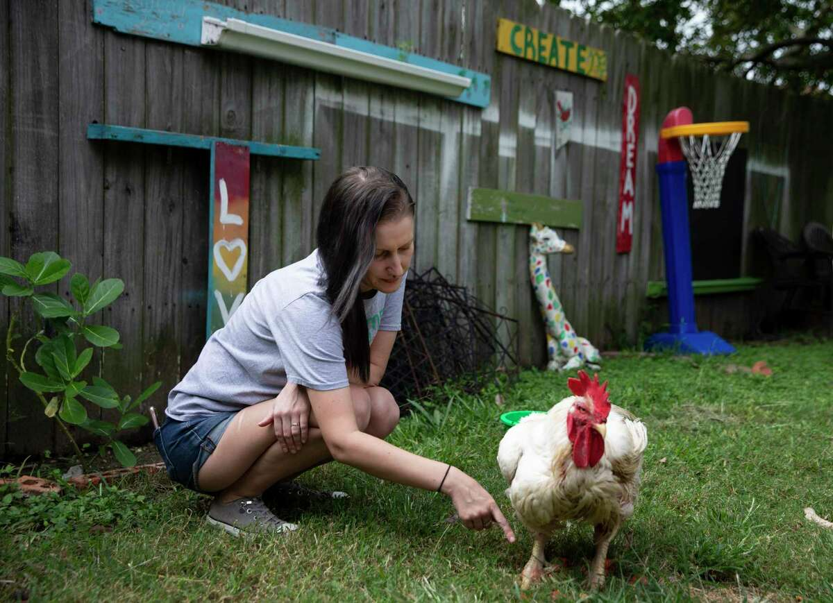 Alanah Brown a rescue rooster, Benny, that she is rehabilitating back to health in her backyard Monday, Oct. 11, 2021, in La Marque. Brown has a flock of 18 backyard chickens. The La Marque City Council has been holding community meetings to discuss a proposed chicken ordinance. There's been an ongoing debate between people who keep backyard chickens and those who resent the clucking birds at the La Marque City Council meetings.