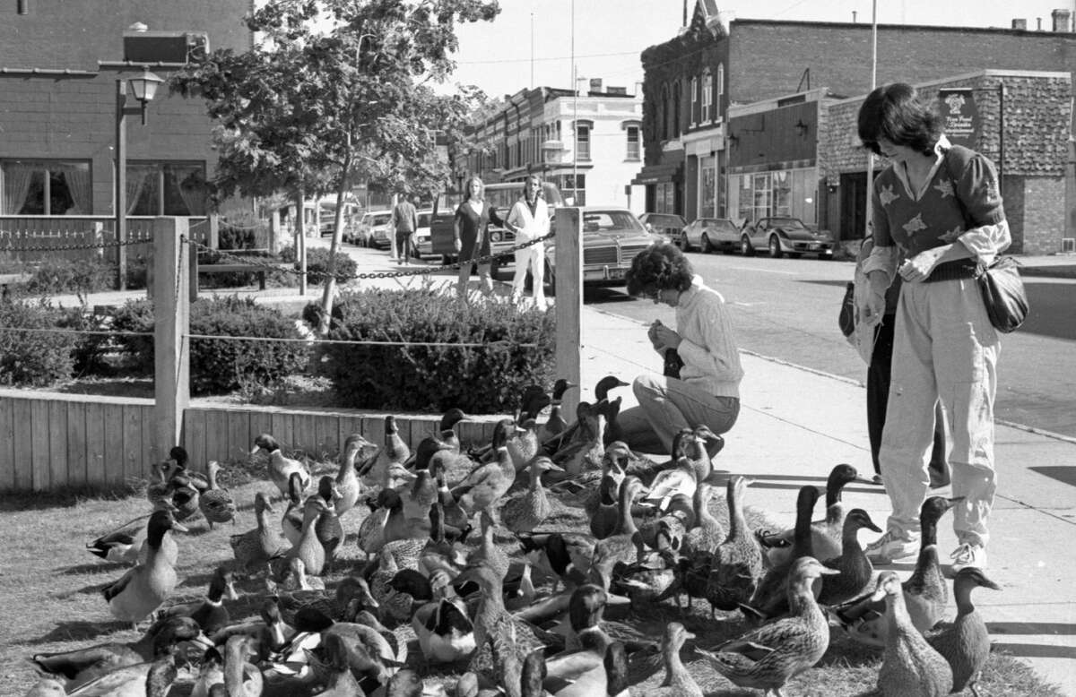 All rumors to the contrary, the group of ducks that makes its home in the Manistee River hasn't left the area, as this picture taken at the Manistee Marina shows. Feeding the ducks are Georgina Challis (right) of New York City; Carolyn Leiding (left) and Gloria Leiding, both of Chicago.The photo was published in the News Advocate on Oct. 13, 1981. (Manistee County Historical Museum photo)