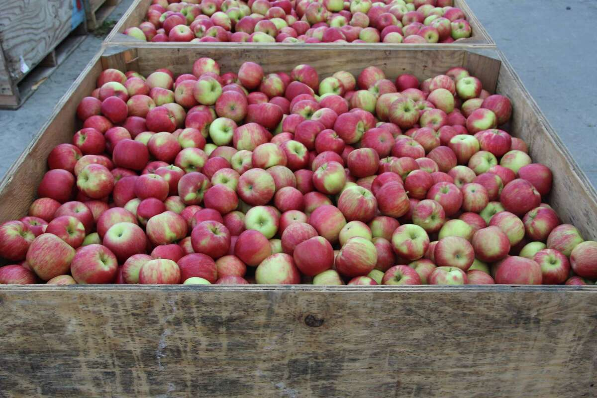 Yes! Apples, a Glenmont-based marketing company and distributor launched an online stores where consumers can buy apples by the box in over 20 varieties.