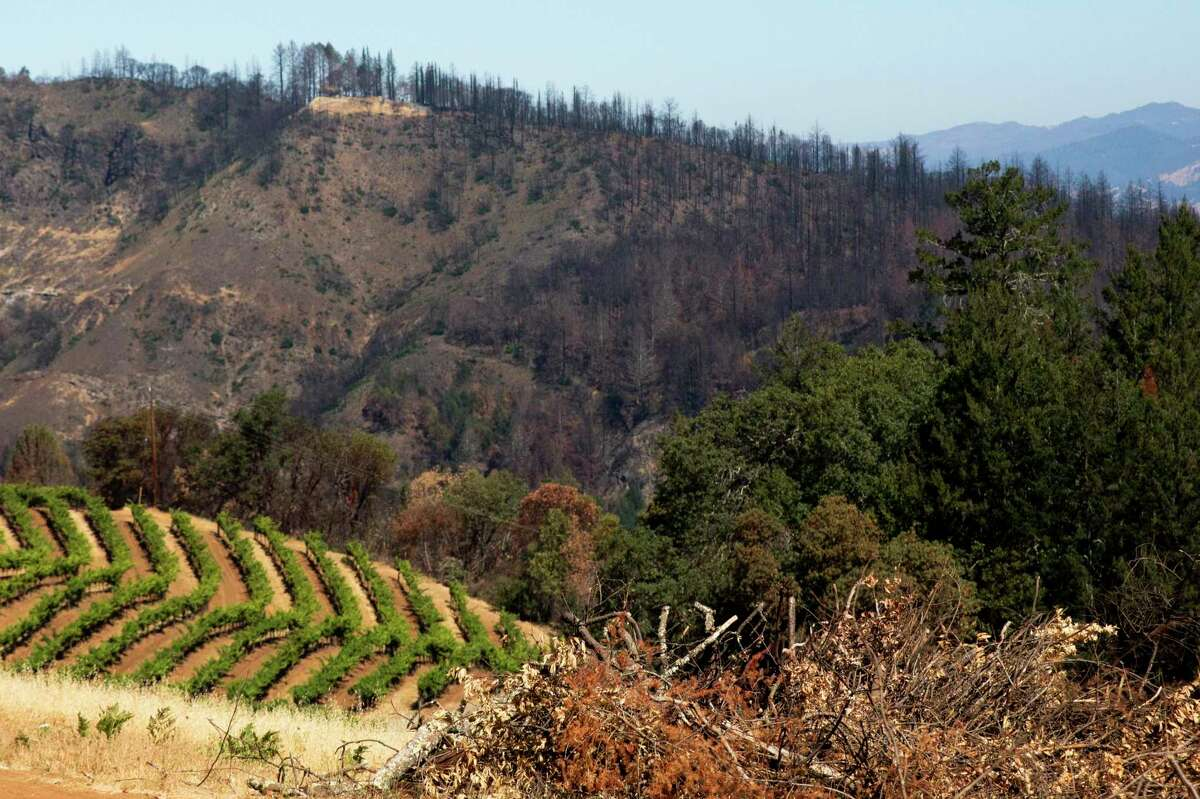 Piles of dried brush cleared from Smith-Madrone Vineyards sits against a landscape of a lush green vineyard and charred mountainside along Spring Mountain Road in St. Helena.