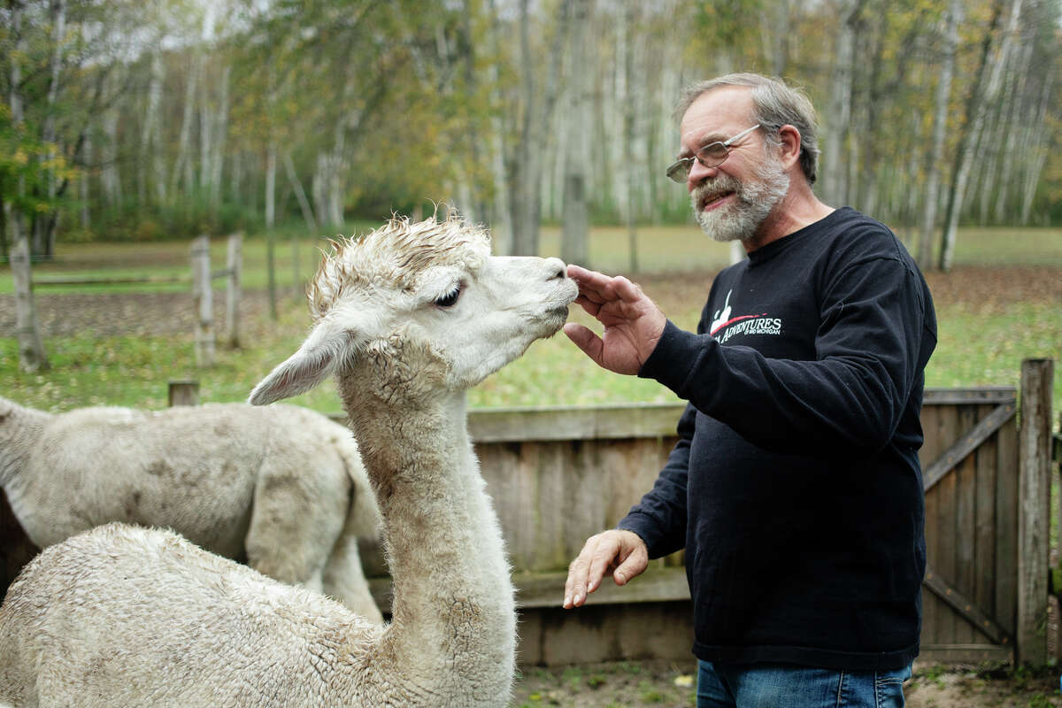 Mark Schick greets one of the family's alpacas Tuesday evening, Oct. 12, 2021. The Schicks own Mid-Michigan Alpaca Adventures, which is hosting the seventh and final Alpaca Fall Bazaar in Auburn on Saturday, Nov. 6 in Auburn. (Katy Kildee/kkildee@mdn.net)