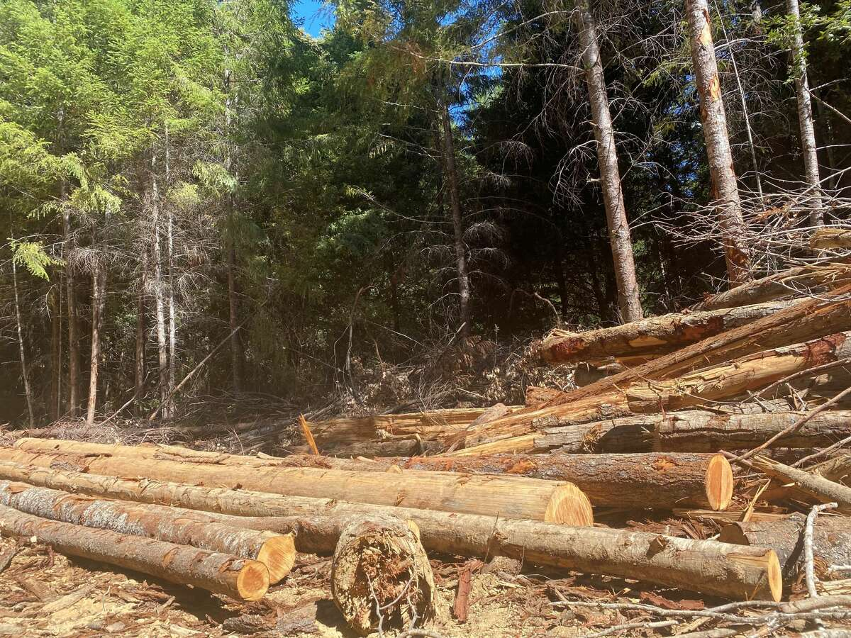 Timber from a logging operation within Jackson DemonstrationState Forest.