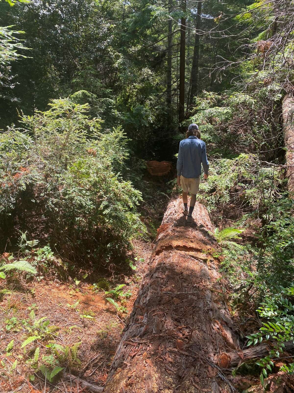 An activist who goes by the name of Alder walks down a large felled redwood at the Caspar 500 site.