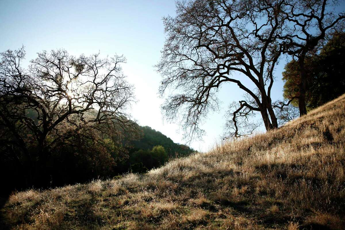Briones Regional Park in Lafayette, where the East Bay Regional Park District agreed in March 2017 to let PG&E uproot 245 trees that were within 14 feet of a gas pipeline.