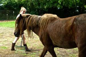 A Legendary Mustang Sanctuary volunteer rakes a corral at the Alhambra nonprofit that rescues wild mustangs and burros for adoption to a forever home. Earlier this year LMS joined the nationwide Harvest Hosts program allowing people to camp with self-contained RVers at more than 2,300 sites.