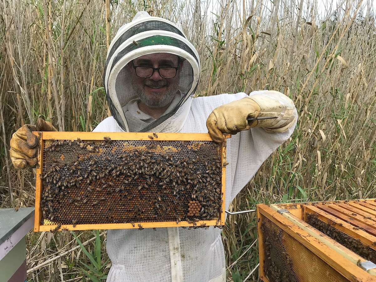"""Pearland resident Jim Orr is president of the Harris County Beekeepers Association, a Pasadena-based group that dates to 1908. The association has members from all around the Houston area, Orr said, and some are apartment dwellers.""""You don't have to have property to be a beekeeper, because we partner with (property owners),"""" Orr said."""