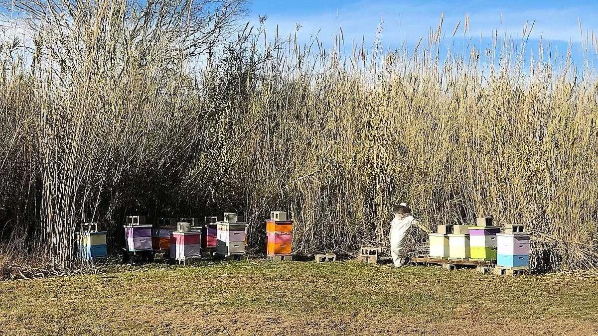 Jim Orr's wife, Rachel, winterizes her bee colony.