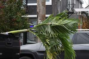 A large palm tree similar ones offered for sale at Shaker & Vine is transported up Union Street on Friday, Oct. 15, 2021, in Schenectady, N.Y.
